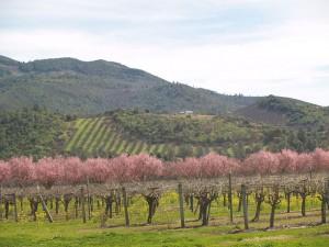 vineyard 4]